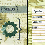 Make a decorated seed packet