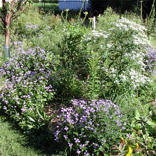Pollinator heaven!