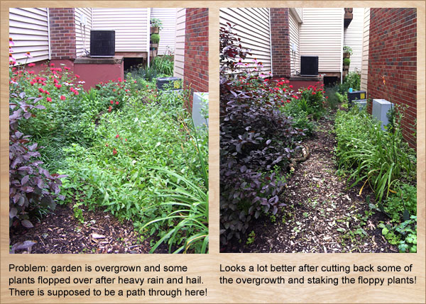 Garden Maintenance in Wet Weather
