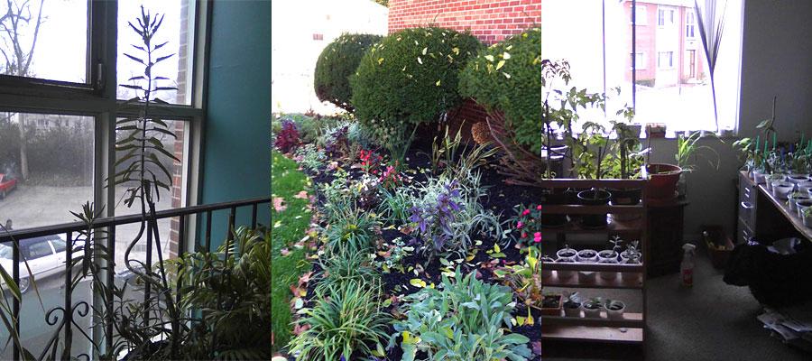 Apartment gardening!