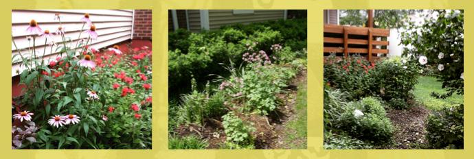 Three views of Carolyn's garden
