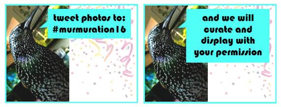 tweet photos to #murmuration16